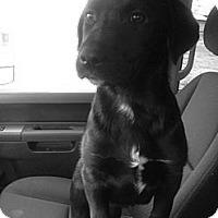 Adopt A Pet :: Hailey - Adoption Pending - Vancouver, BC