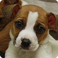 Adopt A Pet :: Magnus - Jackson, MI