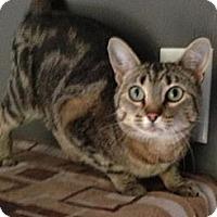 Adopt A Pet :: Lolita - Monroe, GA