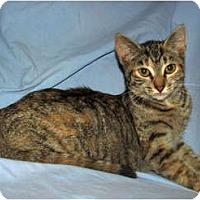 Adopt A Pet :: Pebbles - Norwich, NY