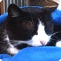 Adopt A Pet :: Bazil - Vancouver, BC