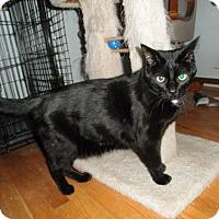 Adopt A Pet :: Anaki - Milwaukee, WI