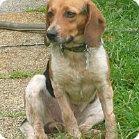 Adopt A Pet :: Annie - Palm Bay, FL