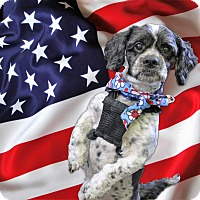Adopt A Pet :: Gizmo - Sacramento, CA