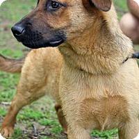 Adopt A Pet :: JUNIE - EDEN PRAIRIE, MN