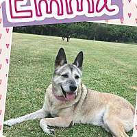 Adopt A Pet :: Emma - Lake Placid, FL