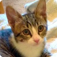 Adopt A Pet :: Misha - Irvine, CA