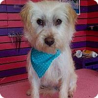 Adopt A Pet :: DORI - Irvine, CA