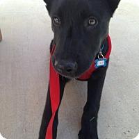 Adopt A Pet :: Mystic - Thousand Oaks, CA