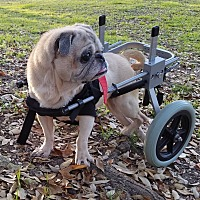 Adopt A Pet :: Blanche - Austin, TX