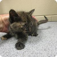 Adopt A Pet :: Torie - Irving, TX
