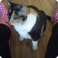 Adopt A Pet :: Gordita - Toronto, ON