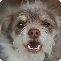 Adopt A Pet :: Roxie - Canoga Park, CA