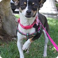 Adopt A Pet :: Pia - Los Angeles, CA