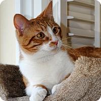 Adopt A Pet :: Oliver - Palmdale, CA