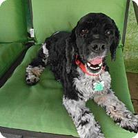 Adopt A Pet :: Truman -Adopted! - Kannapolis, NC