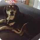 Adopt A Pet :: Lucy Loo