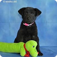 Adopt A Pet :: Byrd - Yreka, CA