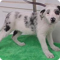 Adopt A Pet :: Faith - Birch Tree, MO