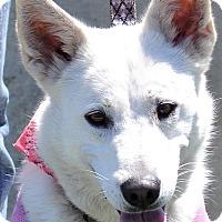 Adopt A Pet :: Snow - Albemarle, NC
