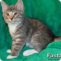 Adopt A Pet :: Emily - Buford, GA