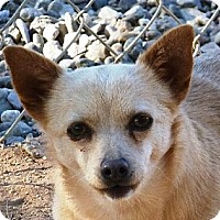 Adopt A Pet :: Porkchop - Las Cruces, NM