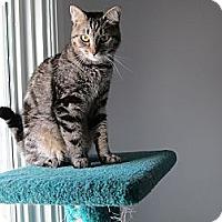 Adopt A Pet :: Maggie - Jeffersonville, IN