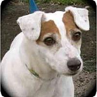 Adopt A Pet :: Lucky - St. Paul, MN