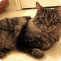 Adopt A Pet :: Dusty-Adoption Pending! - Arlington, VA