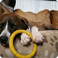 Adopt A Pet :: Tanner - Greeley, CO
