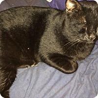 Adopt A Pet :: Merlyn - Walnut Creek, CA