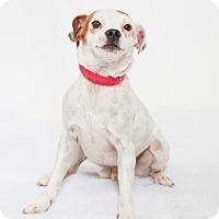 Adopt A Pet :: Jeepers - Jupiter, FL