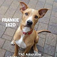 Adopt A Pet :: Frankie - Spring, TX