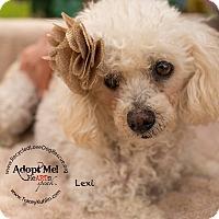 Adopt A Pet :: LEXI - Inland Empire, CA