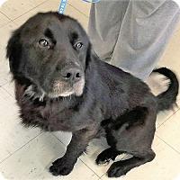 Adopt A Pet :: Tritan - Williston Park, NY