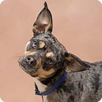 Adopt A Pet :: Jessie - Westfield, NY
