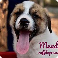 Adopt A Pet :: Meadow - Milton, GA