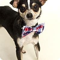 Adopt A Pet :: Landry (Foster Care) - Baton Rouge, LA