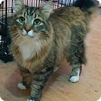 Adopt A Pet :: Sparky - West Lafayette, IN