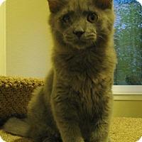 Adopt A Pet :: Romeo - North Highlands, CA