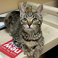 Adopt A Pet :: Wendy - Knoxville, TN
