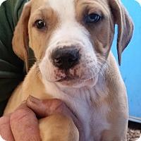 Adopt A Pet :: Morriston - Gainesville, FL