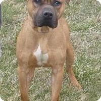 Adopt A Pet :: Bosco - Mineral, VA