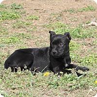 Adopt A Pet :: Danica - Hayes, VA