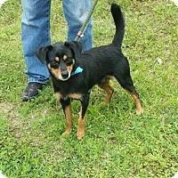 Adopt A Pet :: Ziggy - Livingston, TX