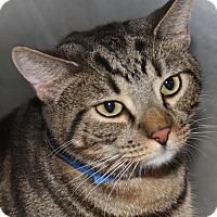 Adopt A Pet :: ZORRO - Clayton, NJ
