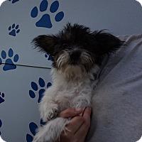 Adopt A Pet :: Honey - Oviedo, FL