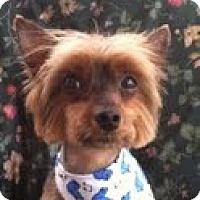 Adopt A Pet :: Lanuk - Fremont, CA