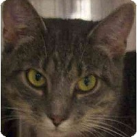 Adopt A Pet :: Lucy - Annapolis, MD