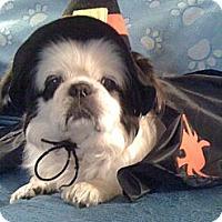 Adopt A Pet :: LuLu - Hancock, MI